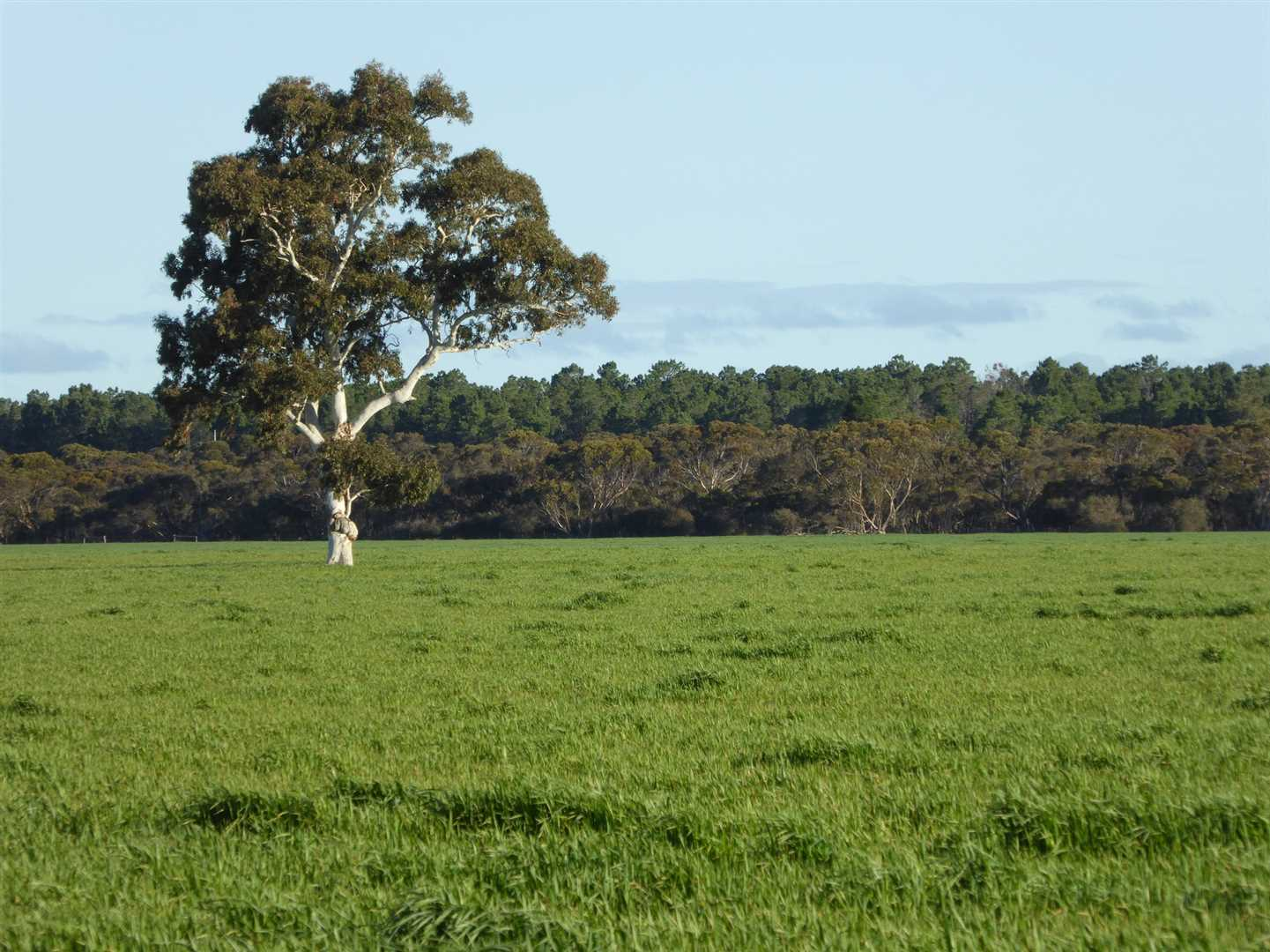 218ha (538ac) Cropping - Grazing