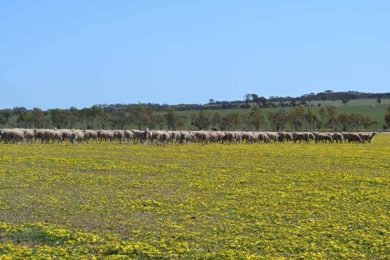 Lease by Tender - South Kwolyn via Quairading