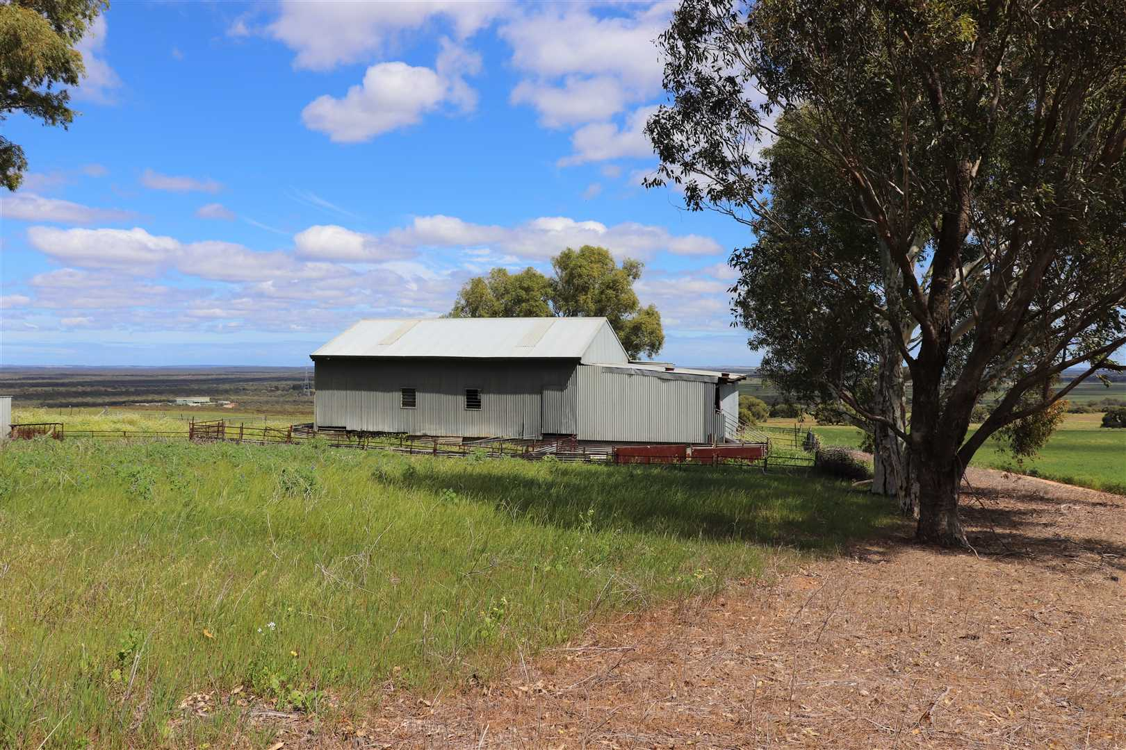 Shearing shed and yards