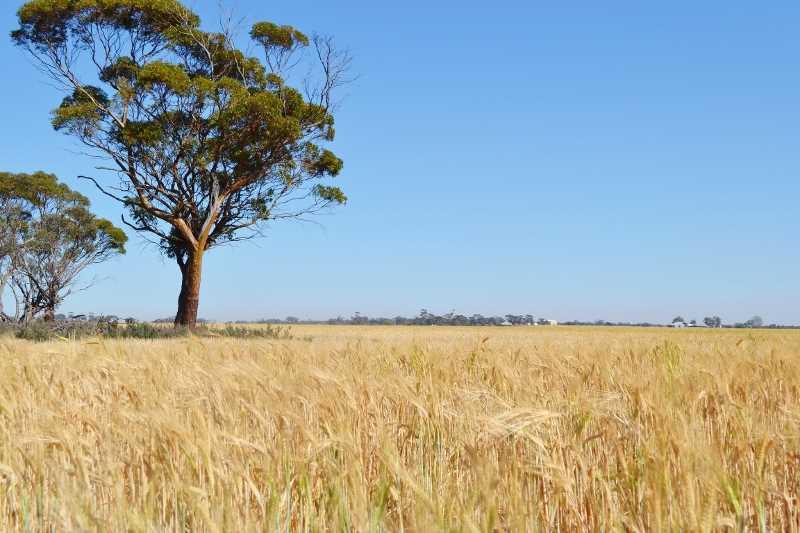 Yorkrakine via Tammin    395 ha       975 acres