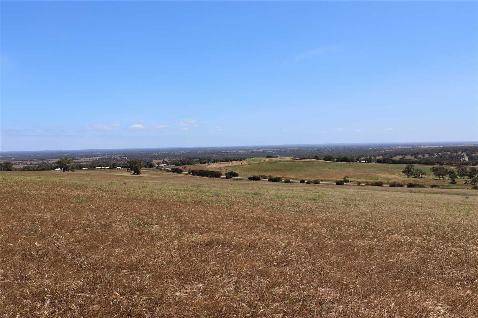 120 ha on Hill top looking West