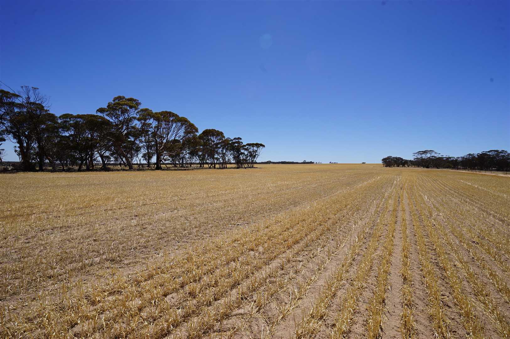 """""""Wangaratta Farm""""       (5,911 Ha  / 14,606 Ac)"""